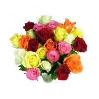 Classic Mixed Roses