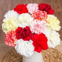 Classic Carnations with Gypsophila