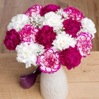 Colombian Carnations