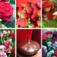 red-flower-collection-71