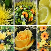 yellow-flower-collection-31