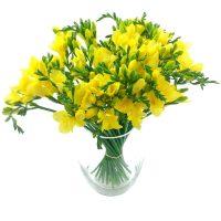 Yellow Freesias